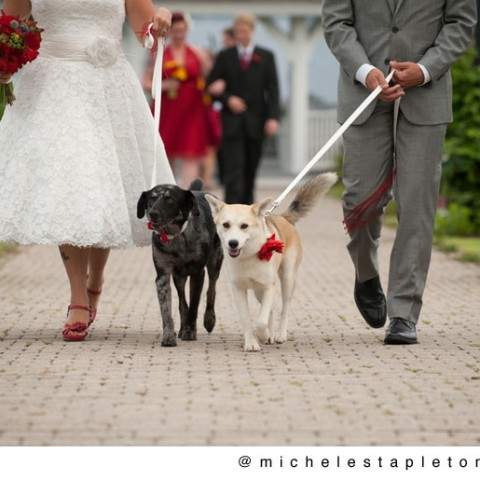 French's Point Coastal Maine Wedding Venue - Gazebo Ceremony Oceanside - Pet Friendly